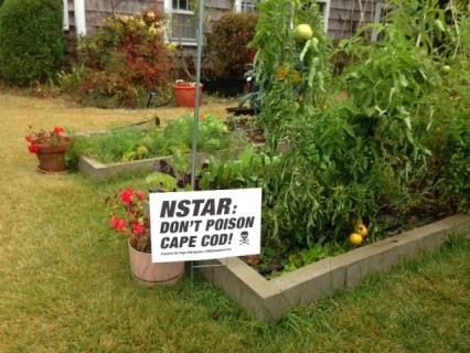 Brian's Organic Garden