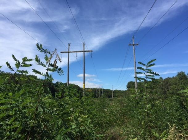 Power Lines, Eastham